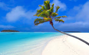 Palm Tree Wallpaper 2560x1440 Isolated Palm Tree Youtube Channel Cover