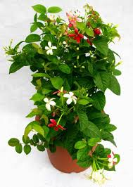 artificial where to buy flowers to plant plants u flowers plant