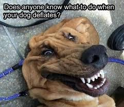 Animal Memes - 24 funny animal memes to make you smile stop the boring
