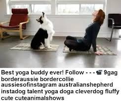australian shepherd yoga 2017 best doga memes doga memes