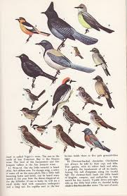 California birds images Common birds of california bird wildlife and animal jpg