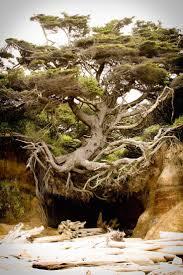 plants native to washington state best 25 washington f c ideas on pinterest grand teton national
