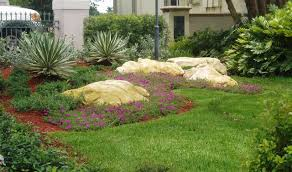 Backyard Ground Cover Options South Florida Flowering Ground Cover Plant Tropical Miami By