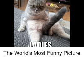 Most Funny Meme - adies the world s most funny picture funny meme on me me