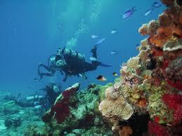 Map Cozumel Mexico by Paradise Reef And Playa Caleta Marina Beach Cozumel Mexico