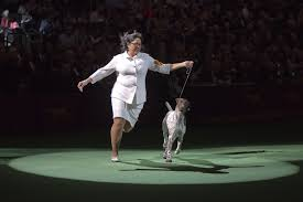 affenpinscher won westminster cj german shorthaired pointer named top dog hartford courant
