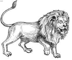 aarona lion colouring pages lion coloring pages prints