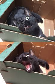 Angry Cat Meme - angry cat noises angry dog noises know your meme