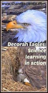 225 best animal science images on pinterest animal science