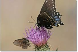 difference between a moth a butterfly and a skipper desertusa