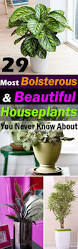 houseplants 29 most beautiful houseplants you never knew about balcony