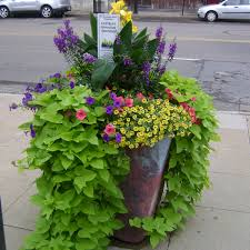 Potted Plant Ideas For Patio by Love This For My Planters Around The Pool Home Ideas Pinterest