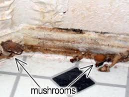 How To Get Rid Of Black Mold In Bathroom Mold Image Library Mold Us Epa