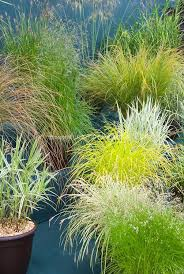 212 best grasses images on landscaping ornamental