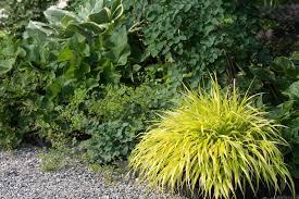 ornamental grass landscape ideas lovetoknow