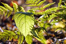 Free Picture Leaf Nature Fern Free Picture Leaf Flora Environment Wood Garden Nature Fern