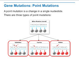 point mutations worksheet point mutation worksheet and point