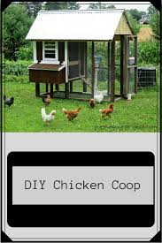 672 best kury images on pinterest construction chicken and