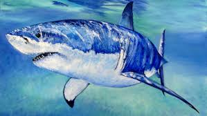 great white shark speed painting youtube