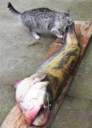 15 best best raw food for cats images on pinterest cat food