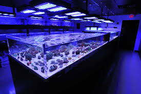 Aquarium For Home by Home Bar Designs Interior Ideas Appealing Luxury Excerpt Wooden
