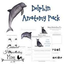 Male Dolphin Anatomy Basic Dolphin Anatomy Diagram And Worksheet Dolphin Drawing