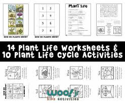 plants grow plant worksheets kids