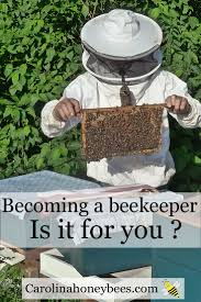 first steps in beekeeping can you do it buy bees bees and