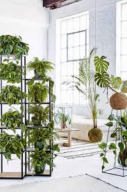 the best indoor plants 19 of the best indoor plants harcourts apg