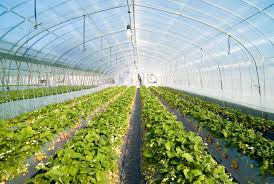 Mythos Silverline Greenhouse Greenhouses Pictures