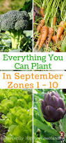 1049 best gardening tips and tricks images on pinterest