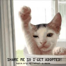 Gifs And Memes - spca turns adoptable pets into gifs to help them find homes