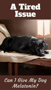 236 best labrador training hq blog posts images on pinterest