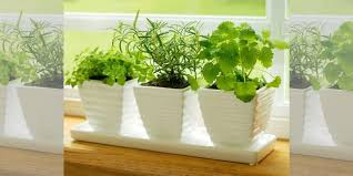 container gardening how to start a container garden and window boxes