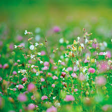 park u0027s organic cover crop seeds