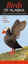 birds u2013 quick reference publishing
