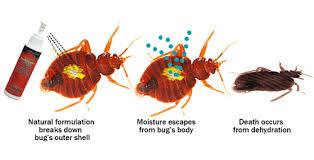 lights out bed bug killer new biopesticide lights out bed bug killer certified to naturally