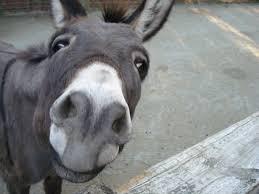 Funny Donkey Memes - very donkey funniest memes daily funny memes