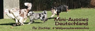 australian shepherd zucht deutschland miniature australian shepherd züchter welpen und mehr