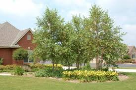 tree installation omaha landscaping