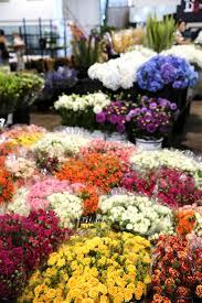 wholesale flowers near me 8 best say it with flowers images on sydney bloemen