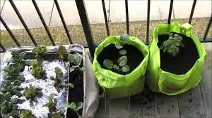 marvellous design apartment garden modest ideas how to start