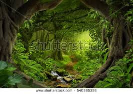 jungle background stock images royalty free images u0026 vectors