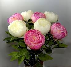 Silk Peonies Eight Stems Of Artificial Silk Pink And Cream Peonies Amazon Co