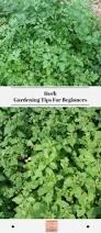 herb gardening tips for beginners exotic gardening