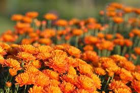 Fall Garden Flag Top 15 Fall Blooming Flowers For A Perennial Garden