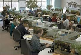 aquarium bureau bureau aquarium 100 images la fabrication d aquarium par abri