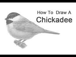 watercolor tutorial chickadee 167 best chickadees images on pinterest chickadees beautiful