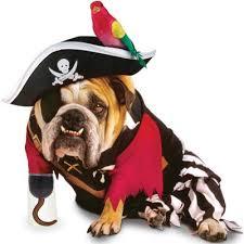 Female Dog Halloween Costumes 133 Dog Halloween Costumes Images Animals Dog