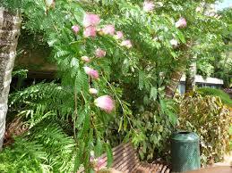 Cairns Botanical Garden by Flowers